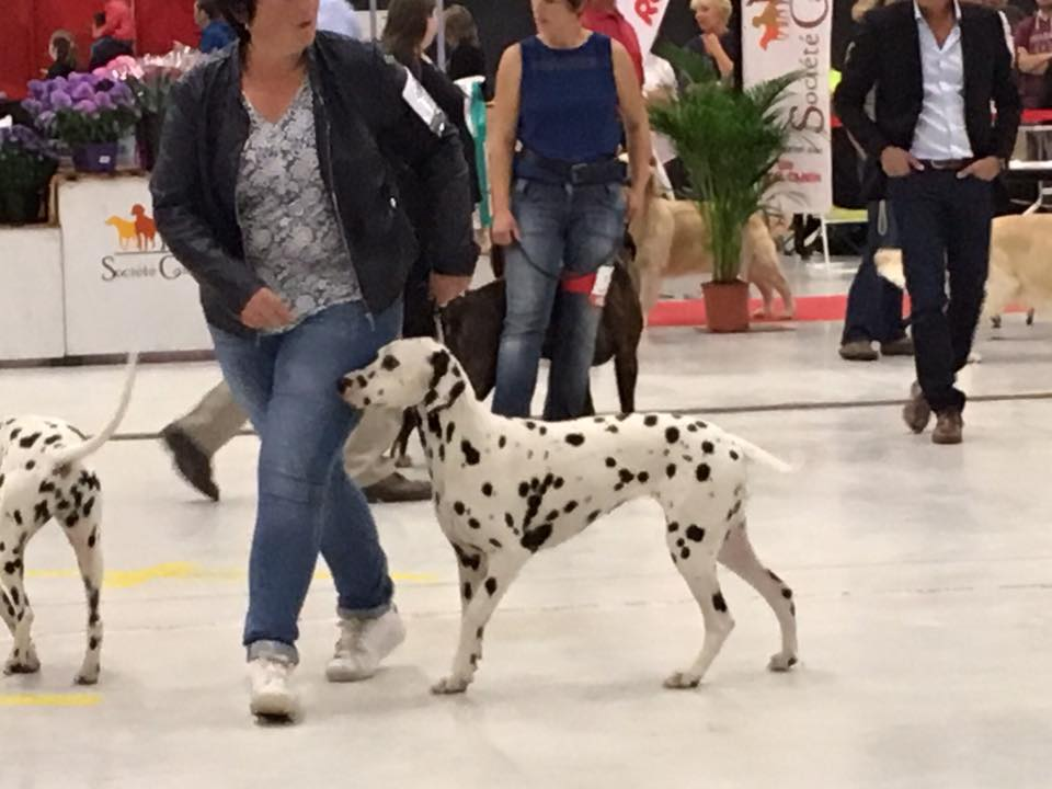 a-lexposition-canine-a-margny-les-compiegne-1