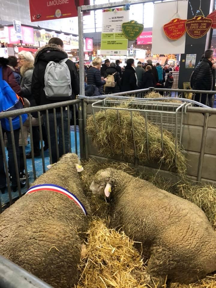 Au salon international de l agriculture un leveur de moutons de m ry la bataille r compens - Aller au salon de l agriculture ...